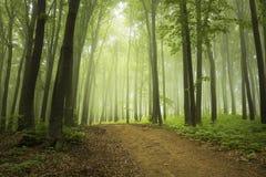 Strada nella foresta del fogy Fotografia Stock