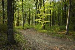 Strada nella foresta del fogy Fotografia Stock Libera da Diritti