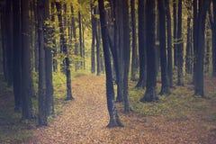Strada nella foresta del fogy Fotografie Stock