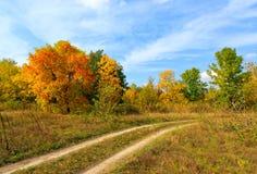 Strada nella foresta di autunno Immagini Stock Libere da Diritti
