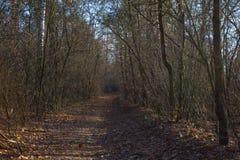 Strada nella foresta di autunno Fotografie Stock Libere da Diritti