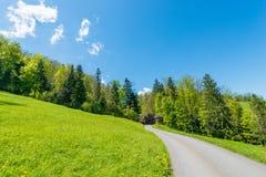 Strada nella foresta di estate Immagini Stock Libere da Diritti