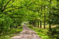 Strada nella foresta di estate fotografia stock