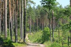 Strada nella foresta di estate Immagini Stock