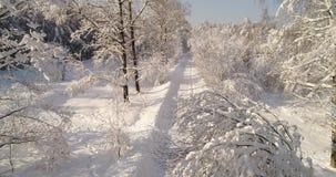 Strada nella foresta di inverno archivi video