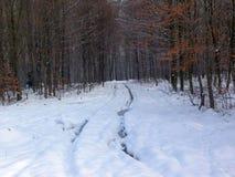 Strada nella foresta di inverno Fotografia Stock