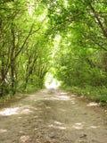 Strada nella foresta. Indicatore luminoso in traforo Fotografia Stock Libera da Diritti