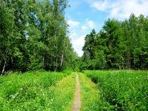 Strada nella foresta, nel parco, nell'arboreto Fotografie Stock