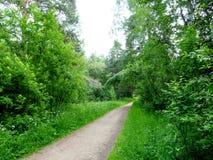 Strada nella foresta, nel parco, nell'arboreto Fotografia Stock