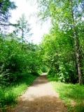 Strada nella foresta, nel parco, nell'arboreto Fotografie Stock Libere da Diritti