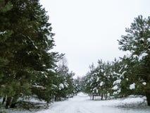 Strada nella foresta nevosa di legni nell'albero innevato di inverno Fotografia Stock