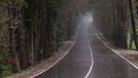 Strada nella foresta in pioggia persistente video d archivio