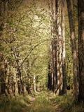 Strada nella natura fotografia stock