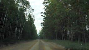 Strada nella vista della foresta dall'automobile stock footage