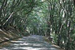 Strada nelle montagne per ciclare immagine stock