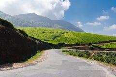Strada nelle piantagioni di tè immagine stock
