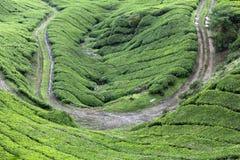 Strada nelle piantagioni di tè, altopiani di Cameron Fotografie Stock