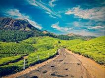 Strada nelle piantagioni di tè, India fotografia stock