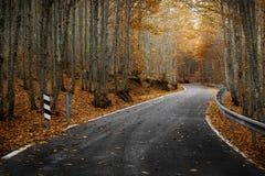 Strada nera in autunno Fotografie Stock