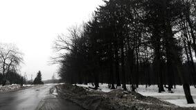 Strada, neve, foresta Fotografia Stock Libera da Diritti