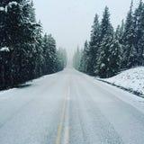 Strada nevosa del parco nazionale di Yellowstone immagini stock