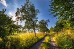 Strada non asfaltata allineata con gli alberi Immagini Stock