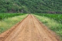 Strada non asfaltata attraverso il cereale di campo medio Immagine Stock Libera da Diritti