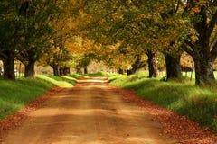 Strada non asfaltata attraverso il viale degli alberi Immagini Stock Libere da Diritti