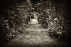 Strada non asfaltata attraverso la foresta Fotografia Stock