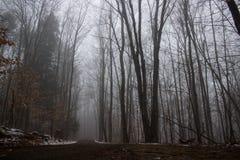 Strada non asfaltata attraverso la foresta nebbiosa Immagine Stock Libera da Diritti