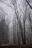 Strada non asfaltata attraverso la foresta nebbiosa Immagini Stock