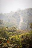 Strada non asfaltata attraverso la giungla africana Fotografia Stock Libera da Diritti