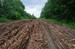 Strada non asfaltata bagnata con i mucchi di detriti legnosi Fotografia Stock