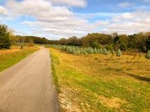 Strada non asfaltata che conduce ai piccoli alberi di Natale che crescono in una fila su un'azienda agricola immagine stock