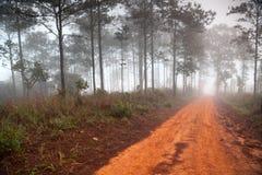 Strada non asfaltata che conduce attraverso la foresta in anticipo della molla Fotografia Stock Libera da Diritti
