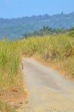 Strada non asfaltata confinata con l'erba e l'aloe della duna Fotografia Stock