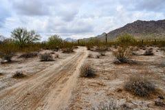 Strada non asfaltata del deserto della sonora con il cactus del saguaro Immagini Stock