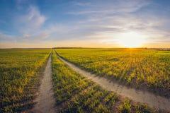 Strada non asfaltata del paesaggio in un campo di semina al tramonto fotografia stock libera da diritti