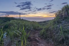 Strada non asfaltata della canna da zucchero a Reunion Island Fotografie Stock Libere da Diritti