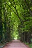 Strada non asfaltata della foresta Fotografia Stock