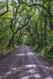 Strada non asfaltata di Lowcountry con le querce alla piantagione della baia di botanica nell'isola di Edisto fotografia stock libera da diritti