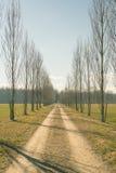 Strada non asfaltata diritta con la fila degli alberi Fotografie Stock