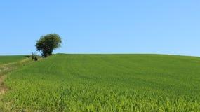 Strada non asfaltata e giovani campi della piantina del grano fotografia stock libera da diritti