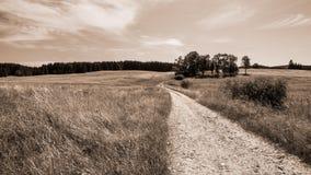 Strada non asfaltata e un gruppo di alberi a foglia larga nel paesaggio rurale fotografia stock
