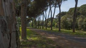 Strada non asfaltata e viale in Italia la fine dell'estate Fotografia Stock