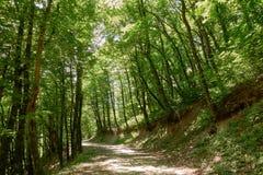 Strada non asfaltata in foresta verde densa immagine stock libera da diritti