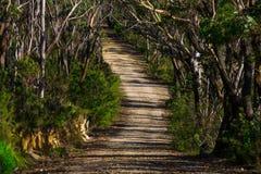 Strada non asfaltata fra il corridoio degli alberi Fotografia Stock