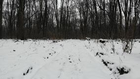 Strada non asfaltata innevata nel legno, stagione invernale Mosca liscia indietro a bassa quota video d archivio