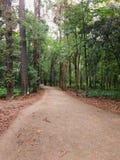 Strada non asfaltata in mezzo alla foresta Fotografie Stock