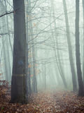 STRADA NON ASFALTATA IN MISTY FOREST Fotografia Stock